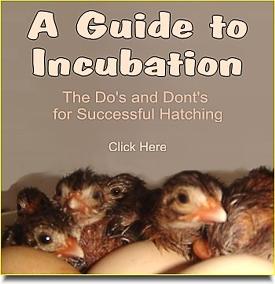 Egg Incubation Advice